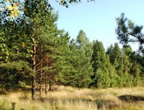 Погода в Україні на вихідні 20 - 21 вересня