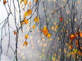 Сьогодні на заході України очікуються дощі, на решті території - без опадів