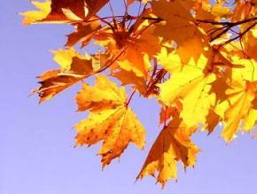 28 жовтня в Україні без опадів, температура до +12