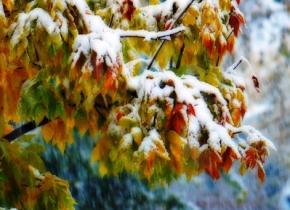 В пятницу в Украине мокрый снег, гололед и сильный ветер