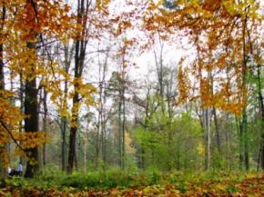 Завтра погода в Україні без опадів, температура до +11
