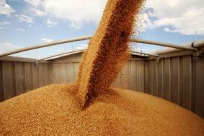 Украина экспортировала 12,7 млн. тонн зерна