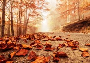 В середу в Україні буде туман, але без опадів