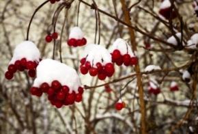 В ближайшие дни Украину ждут небольшой снег и гололедица
