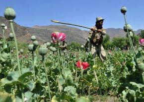 Афганістан побив свій рекорд з виробництва опіуму