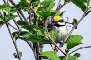 Біологи пояснили здатність птахів передчувати природні катаклізми