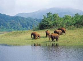 Тваринам на Землі загрожує масове вимирання, - вчені