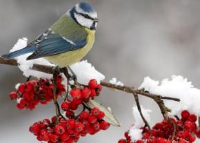 Синоптики прогнозируют в Украине снег, гололед и мороз до -18 градусов
