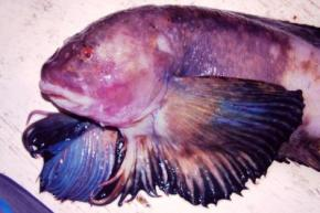 Биологи нашли рыбу на рекордной глубине