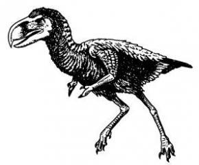 Птицы потеряли зубы около 116 миллионов лет назад, - ученые
