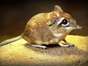 В 2014 году ученые из США открыли 221 вид живых существ, ранее неизвестных науке