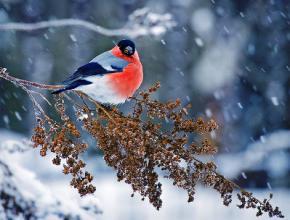 В Україну повертаються морози і сніг