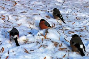 28 января в Украине ожидается похолодание