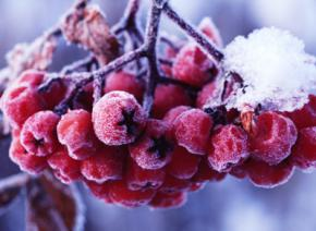 Сегодня в Украине ожидаются осадки в виде снега с дождем