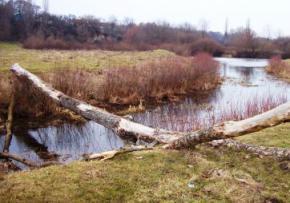 У четвер в Україні похолодає і повернуться дощі