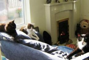 У Великобританії відкрили будинок для престарілих котів