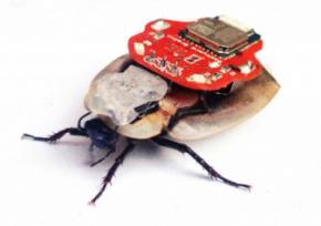 Тараканы - киборги будут искать людей под завалами