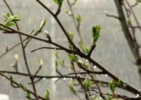 На выходных в Украине снова похолодает и пройдут дожди