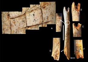 Неандертальців запідозрили в канібалізмі