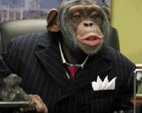 Суд наділив пару шимпанзе правами людини і відпустив на свободу