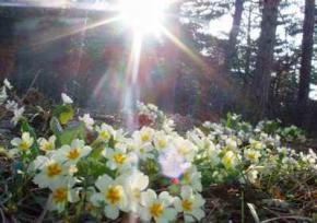 Сьогодні на заході України сонце, а на сході грози