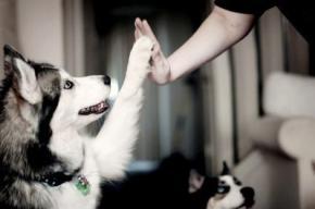 Вчені пояснили дружбу між собакою і людиною