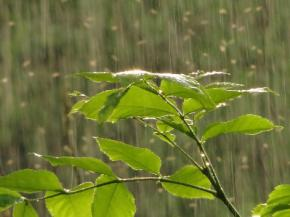 Сегодня на всей территории Украины дожди