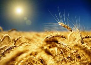 Україна експортувала понад 31 млн т зерна