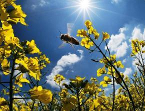 На вихідних в Україну прийде 30-градусна спека