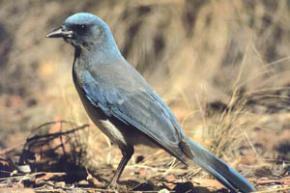 Птицы могут определить качество ореха, даже не вскрывая скорлупу, - ученые
