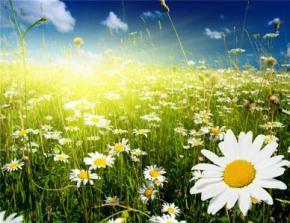 Лето 2015 будет жарким – Гидрометцентр