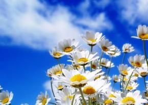 8-9 июня в Украине ожидается сухая и жаркая погода до +32