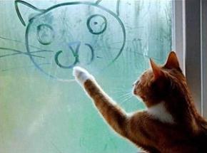 Вчені з'ясували, що велика частина котів - лівші