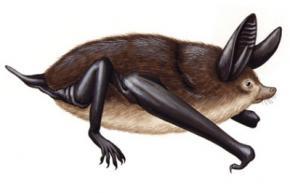 Палеонтологи знайшли гігантського бігаючого кажана