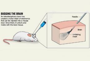 Нейрофизиологи научились вводить электронику в мозг крысы при помощи шприца