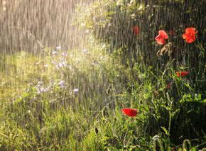 Сегодня в Украине ожидаются дожди