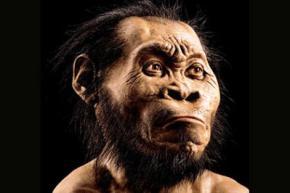 В Южной Африке обнаружен новый вид предков человека
