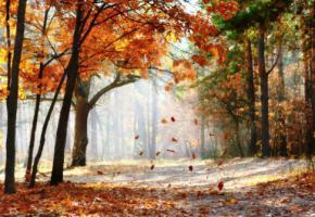 Синоптики рассказали, какой будет осень и зима в Украине
