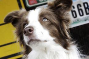 Собака будет претендовать на пост президента США 5 сентября