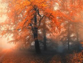 Україну огорнуть тумани