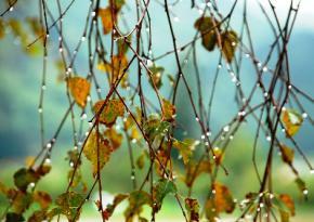 Начало недели в Украине начнется с дождей