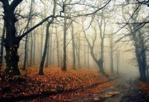 13 октября в Украину придет зимняя погода
