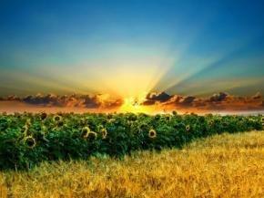 Органическое производство. Развитие в современных условиях